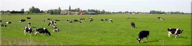 Landschap Amstelland
